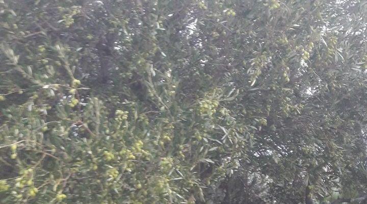Αγροτεμάχιο 20 στρέμματα προς πώληση, Άγιος Ιωάννης Ιεράπετρας floorplan 1